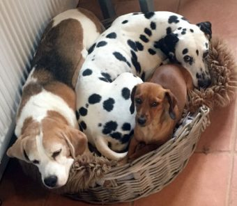 Dog friendly holiday cottages, Norfolk