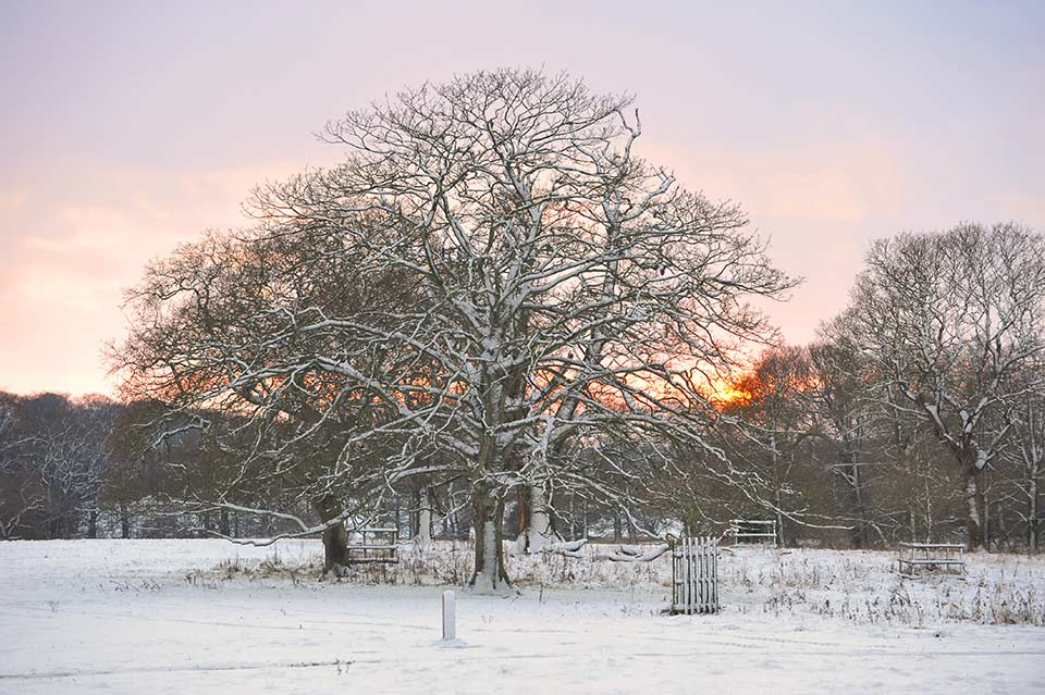 Norfolk in winter